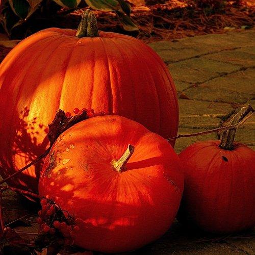 Halloween al Museo del Giocattolo di Bra Idea Tourism